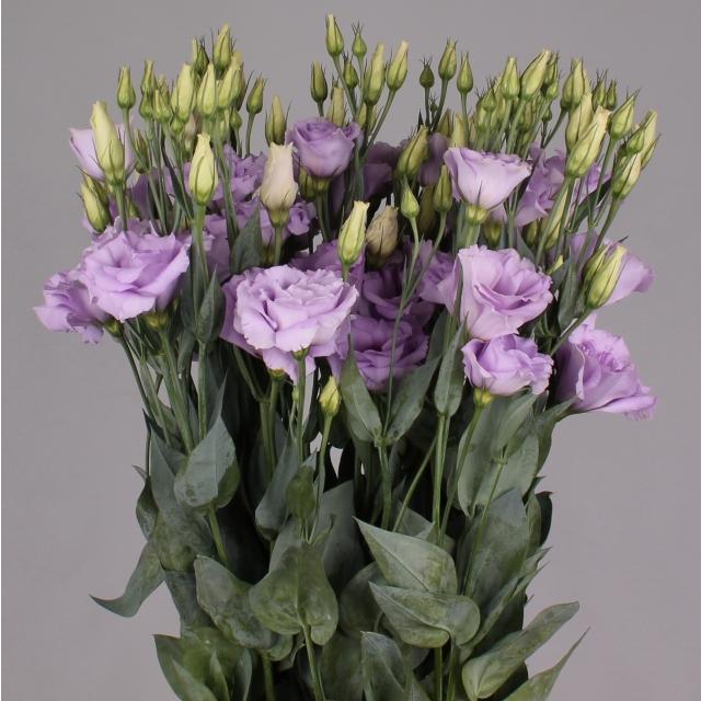 Lisianthus - I fiori di White