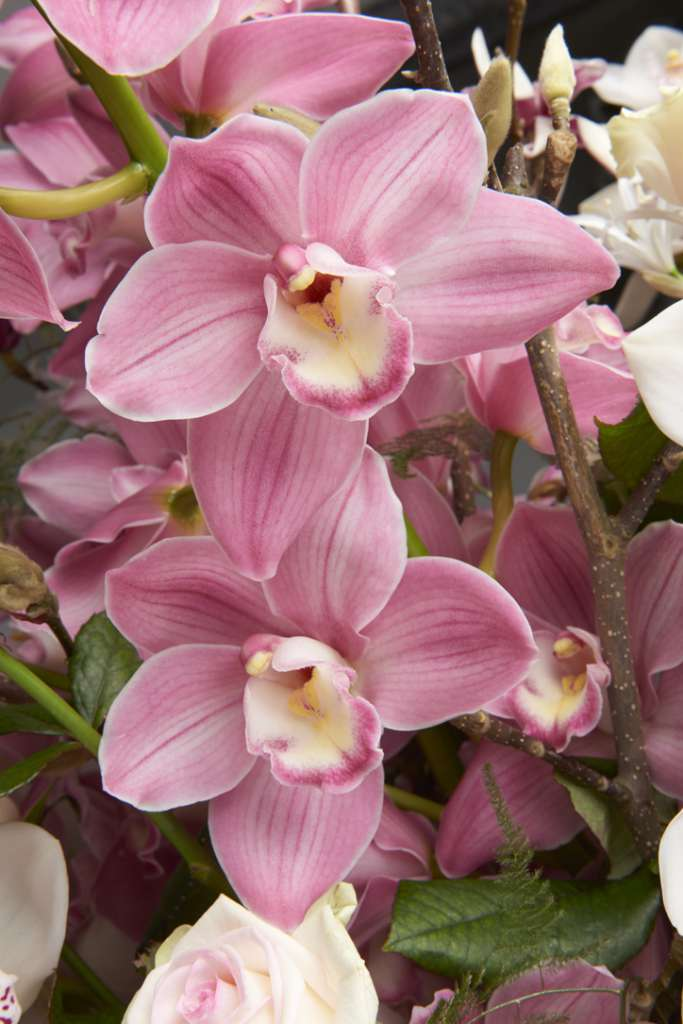 Orchidee - I fiori di White